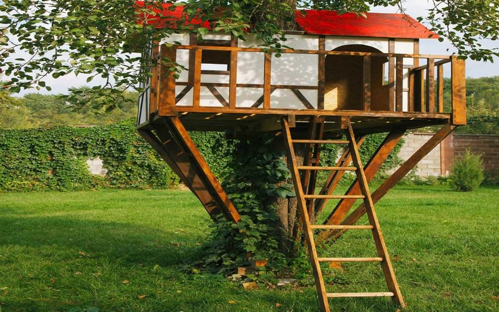 سلم لبيوت فوق الاشجار