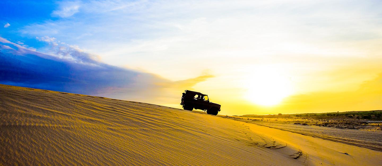 الحياة البرية السعودية