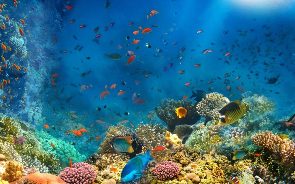 عالم اسماك البحر الاحمر