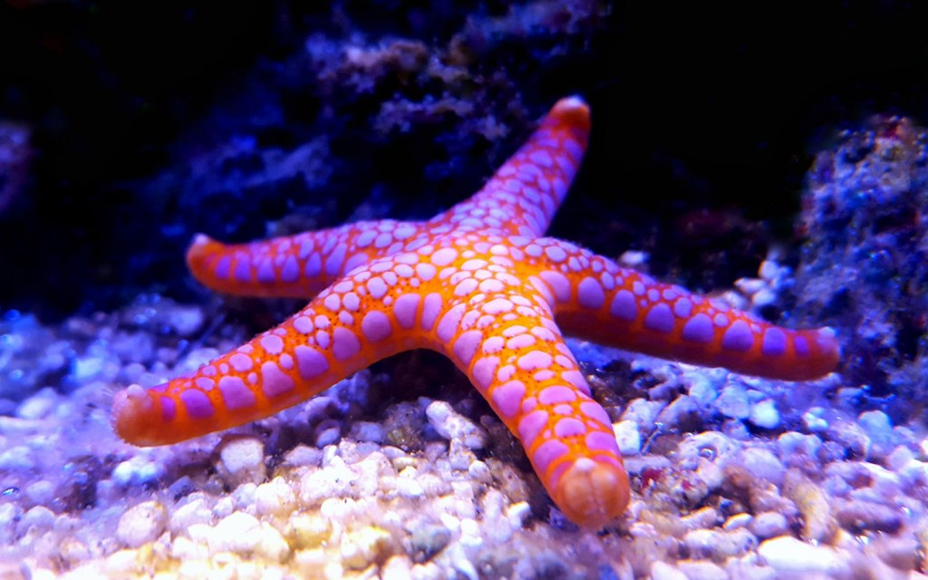 انواع اسماك البحر الاحمر الغريبة